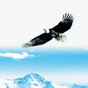 ציידי הטיסות - Flights Hunters